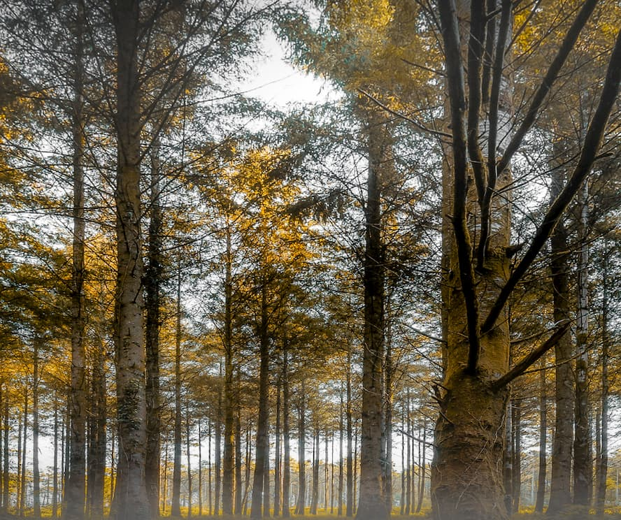 Discover Cardinham Woods