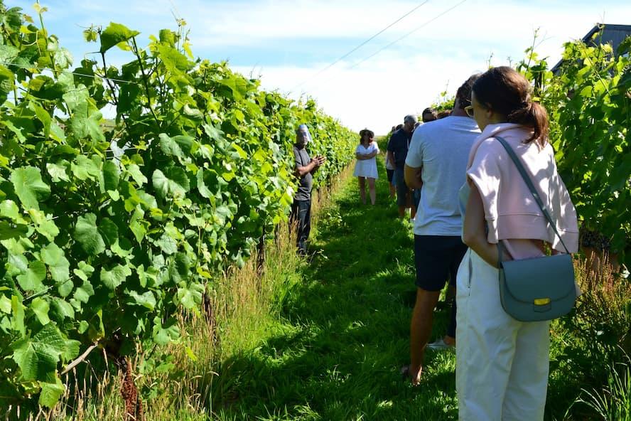 Wine tour & tasting (1).jpg