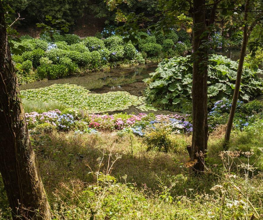 Cornwalls Great Gardens